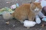 Заказуха на кота