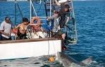 «Заклинательница акул»: игры со смертью