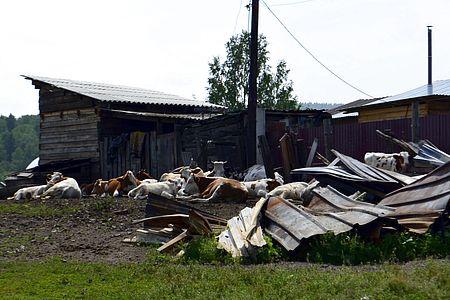 Огоньки (Балахтинский район)
